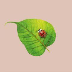chicmic-bamboonapkin-BN145-Ladybug-00.